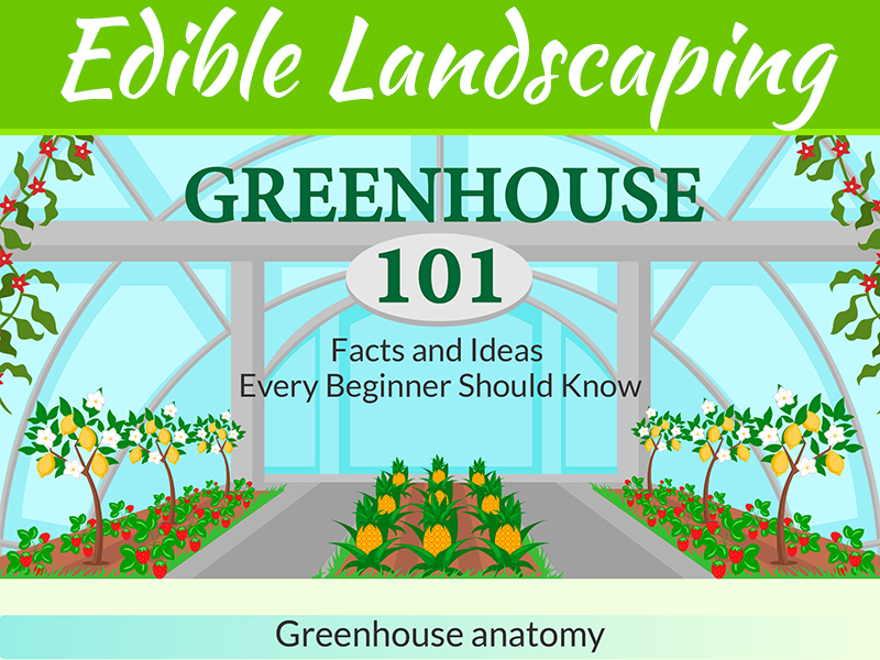 Creating Edible Landscaping