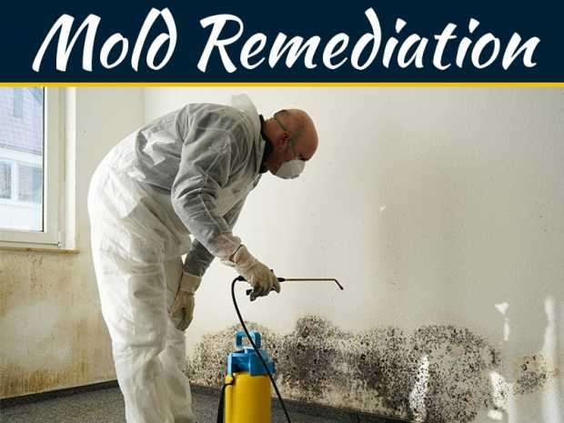 Everything You Need To Know About Mold And Mold Remediation