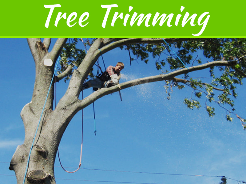 Tree Care Tips Ideal Way Of Trimming A Tall Tree