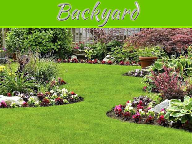 7 Eco-Friendly Ways to Care for Your Backyard