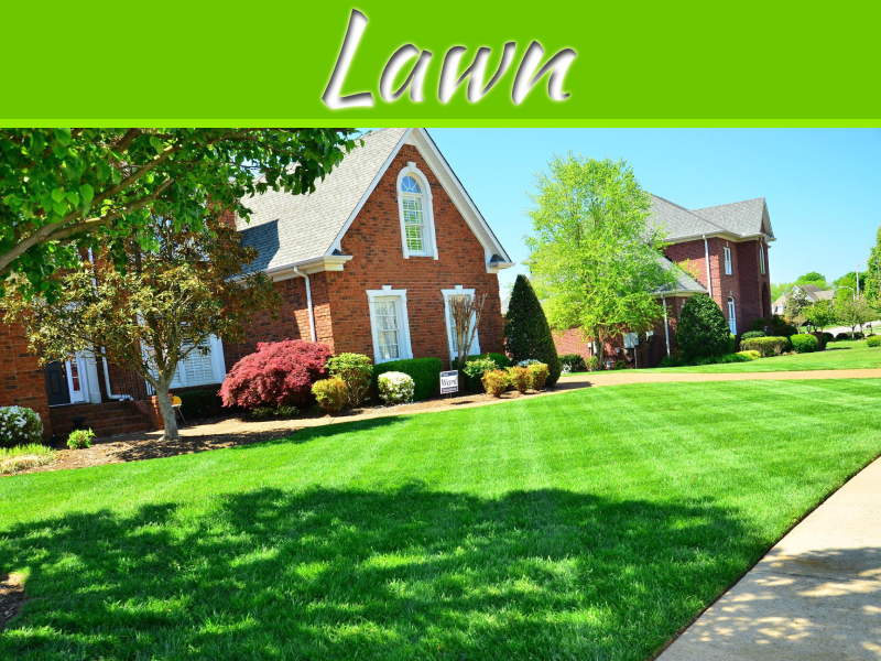 8 Steps To Transform Your Unhealthy Lawn
