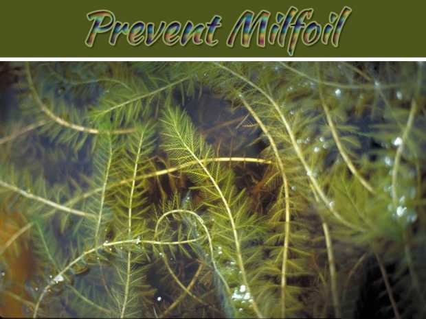 Controlling Your Environment: 4 Ways To Prevent Milfoil From Getting Out Of Hand