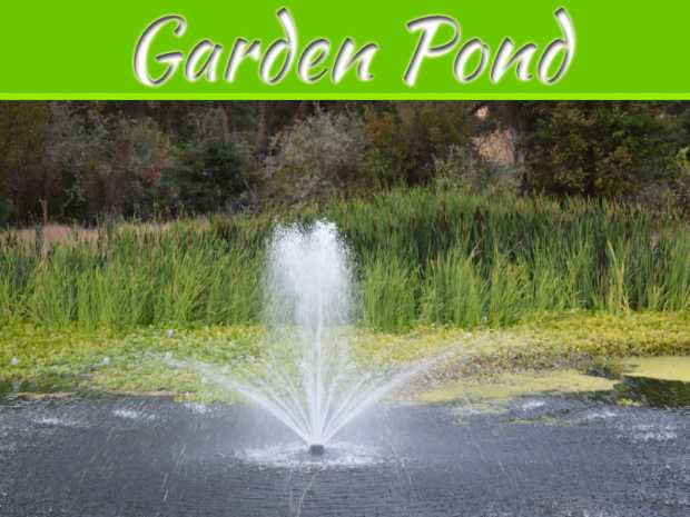 Debunking Common Myths About Owning A Garden Pond