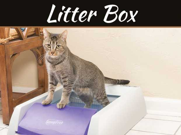 Where To Put A Self-Cleaning Litter Box In Your Home
