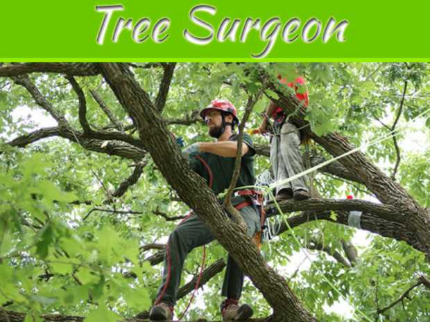 4 Signs You Should Call A Tree Surgeon