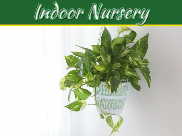 5 Best Indoor Nursery Plants