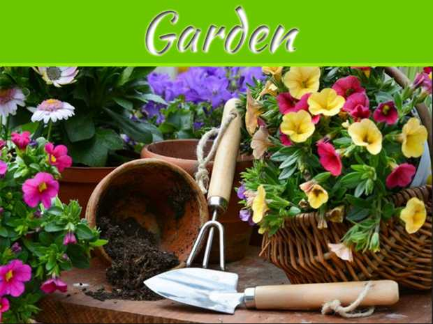 Grow Your Own Chemical-Free Garden