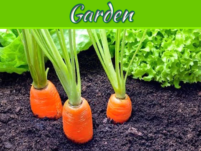 What Is The Easiest Thing To Grow In A Garden?