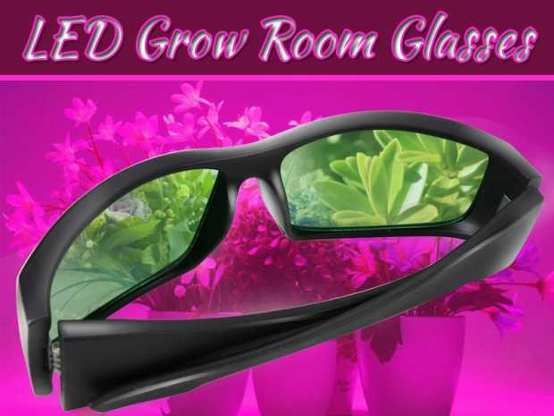 Why You Should Wear LED Grow Room Glasses While Using LED Lights