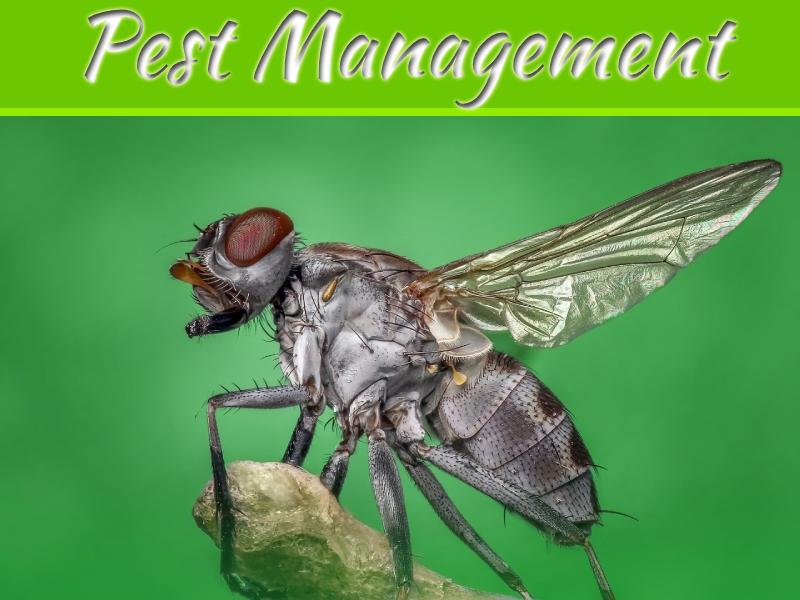 Getting Exterminators For Your Pest Problems