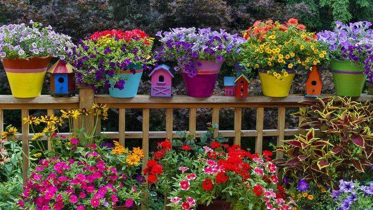 Make Your Garden Colorful