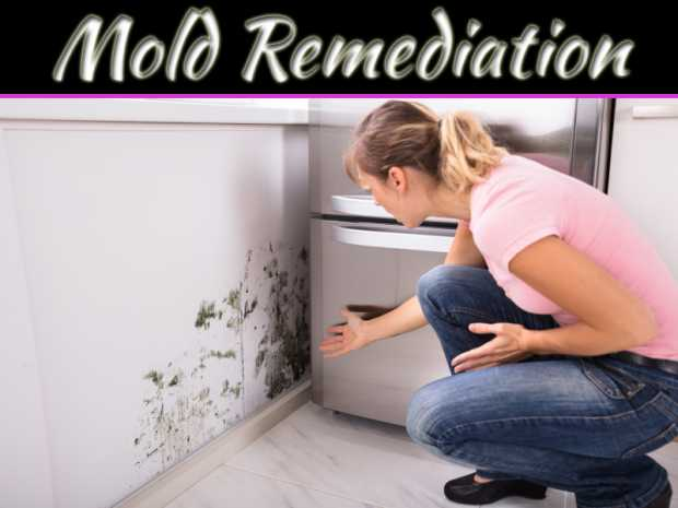 Signs Your Home Has Mold Contamination