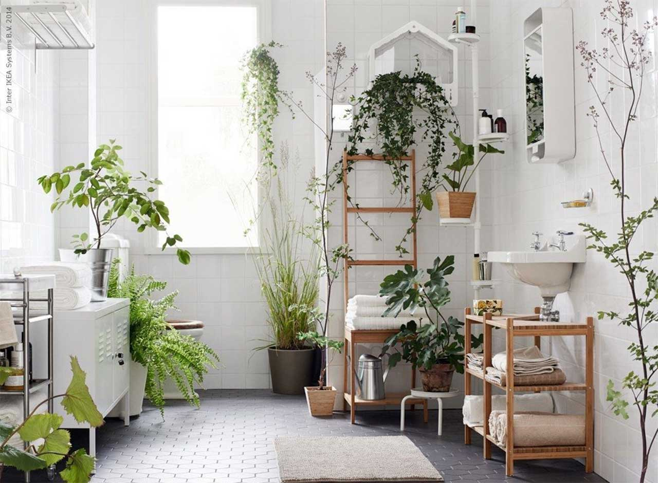 English Ivy Bathroom Plant