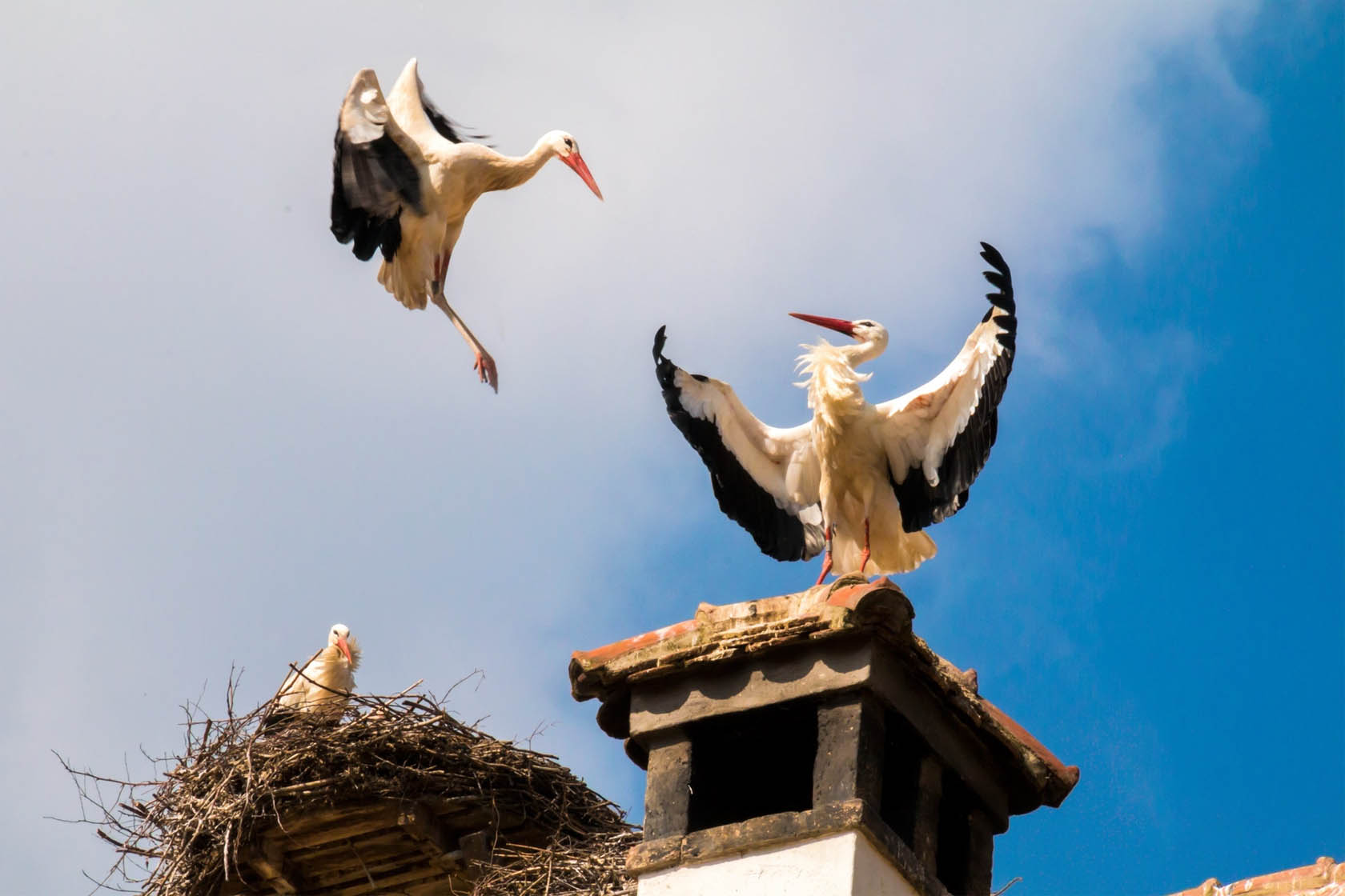 Birds Nesting In Your Home