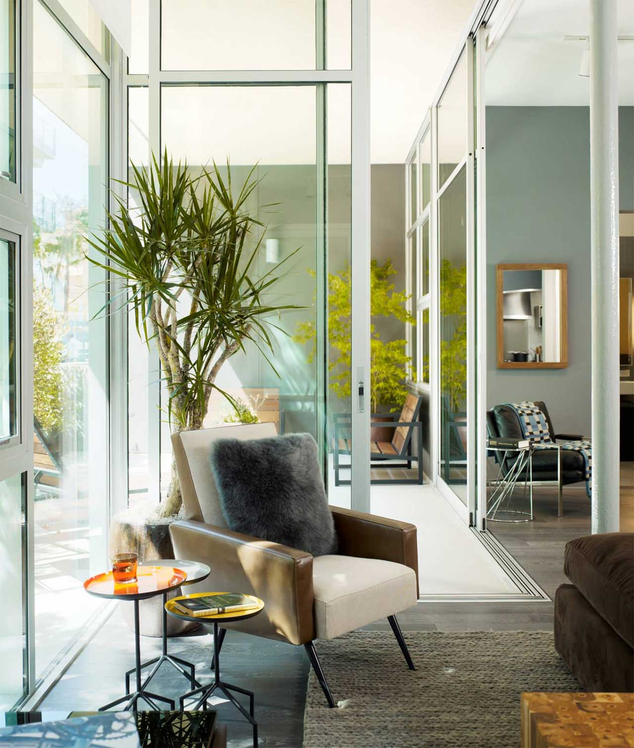 Contemporary Tall Indoor Plants