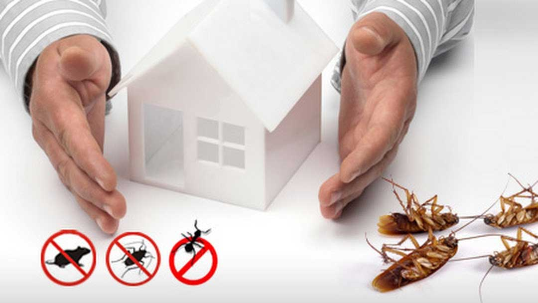 Check Out These Helpful Suggestions To Get Rid Of Pests