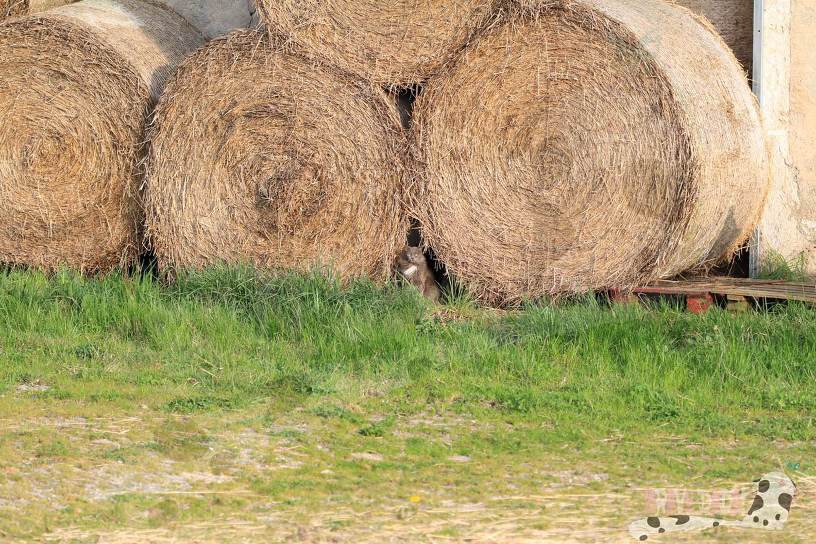 Sell Hay For Animal Feed