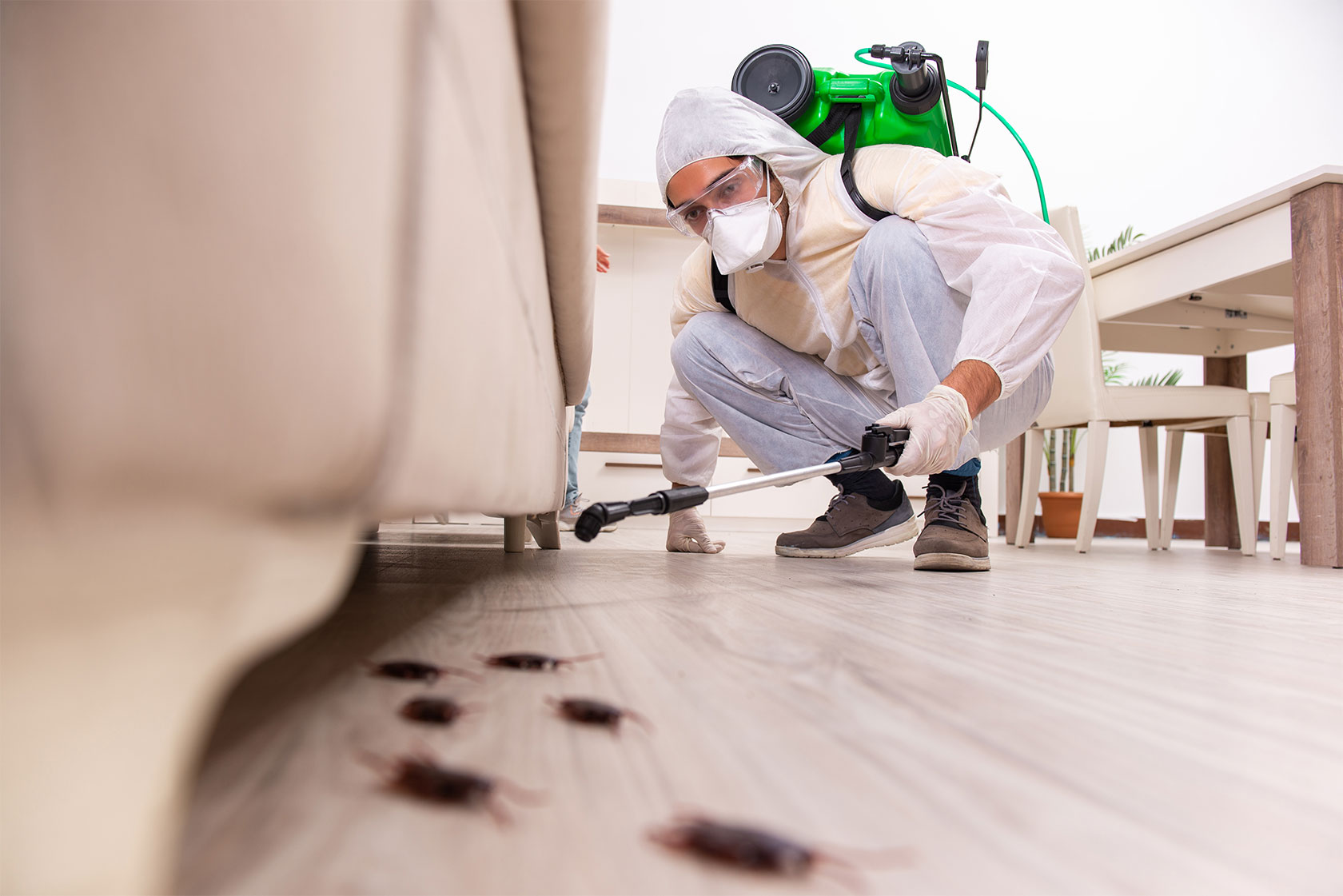 10 Signs Of Home Damage Caused By Pests | My Decorative
