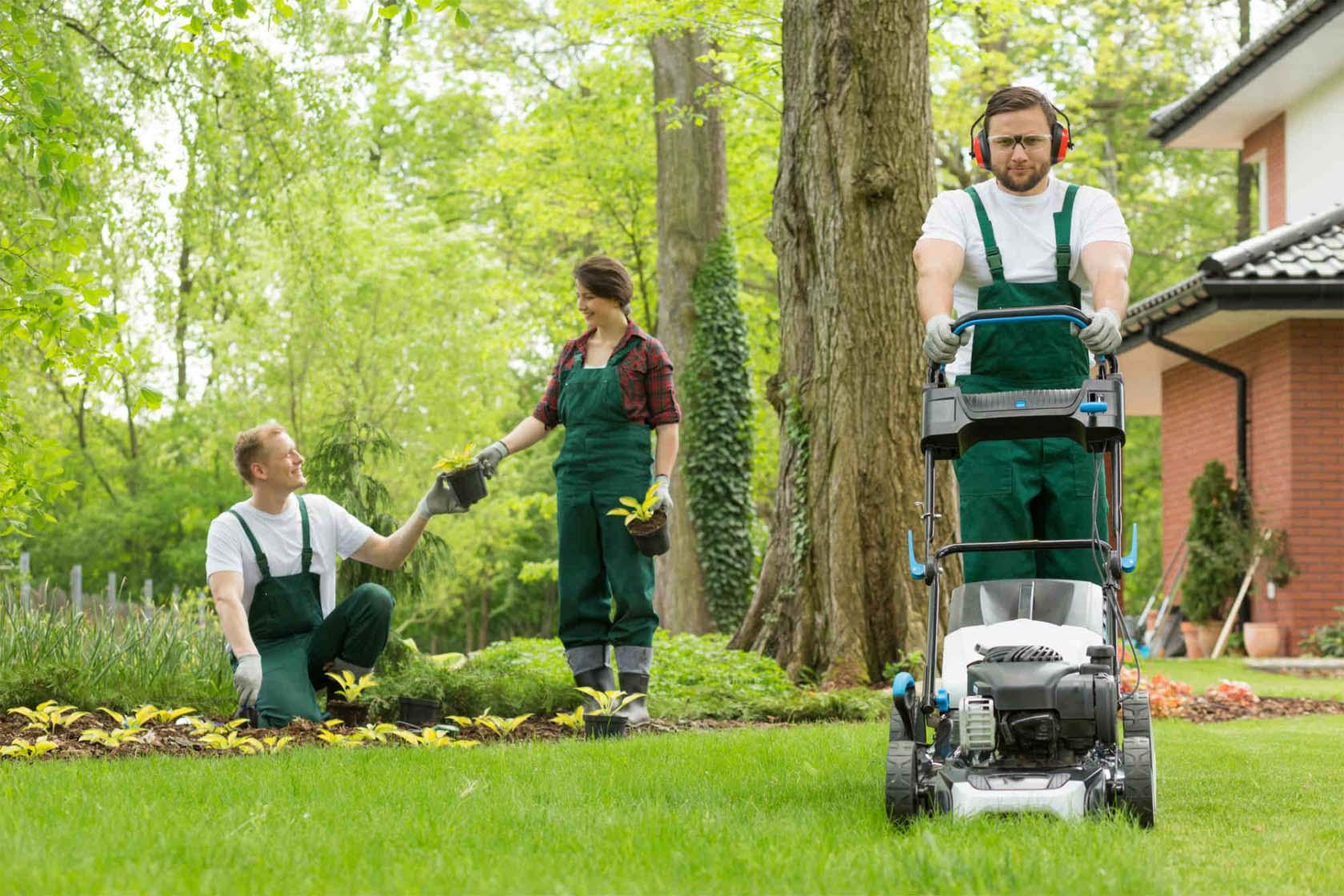 Professional Lawn Care Service