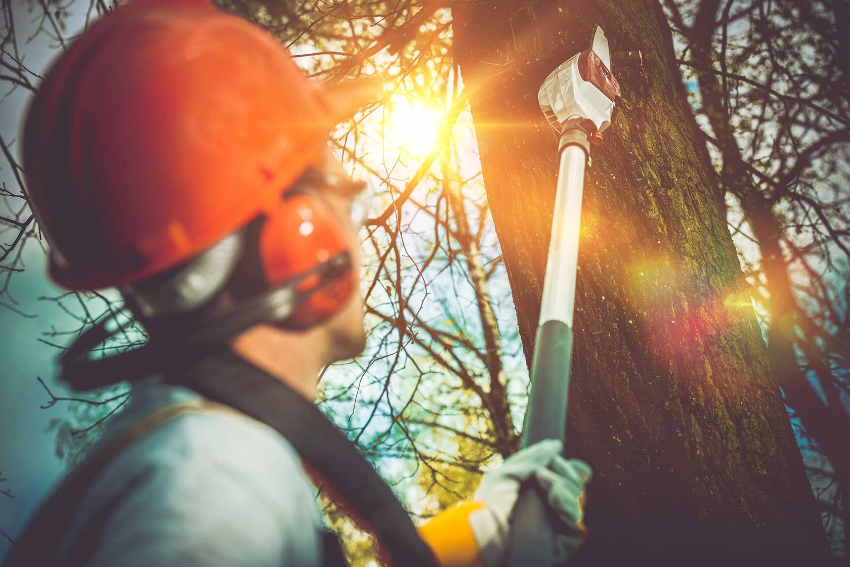Tree Removal Specialist