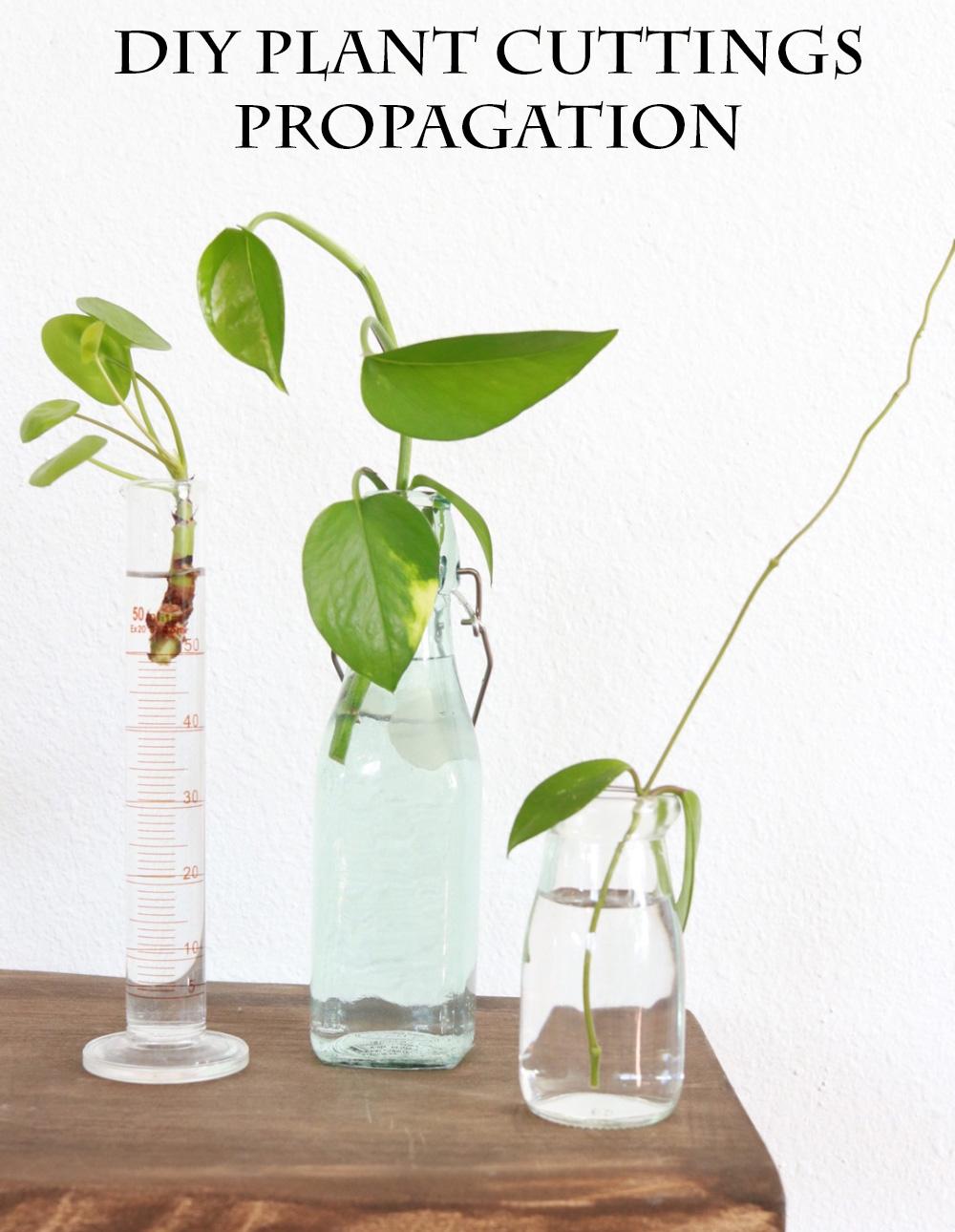 DIY Plant Cuttings Propagation