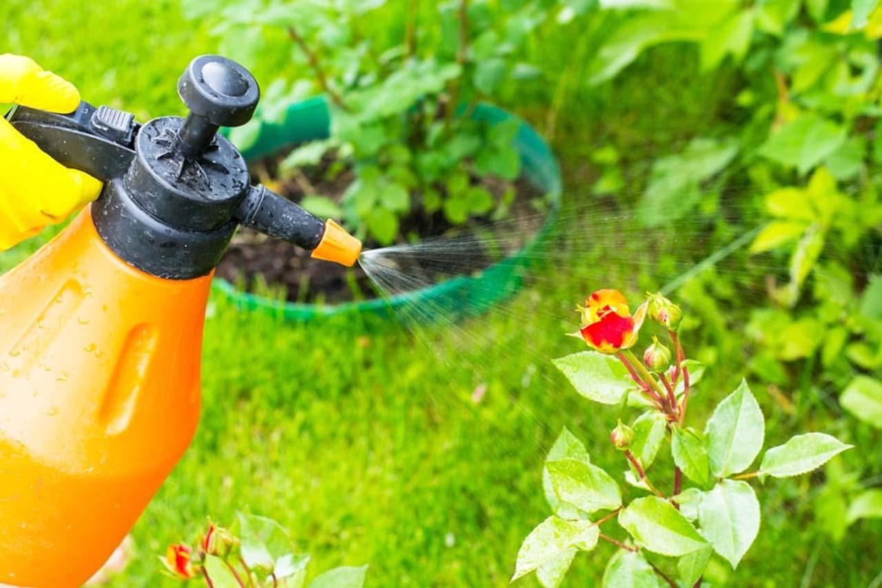 Bug-Free Backyard
