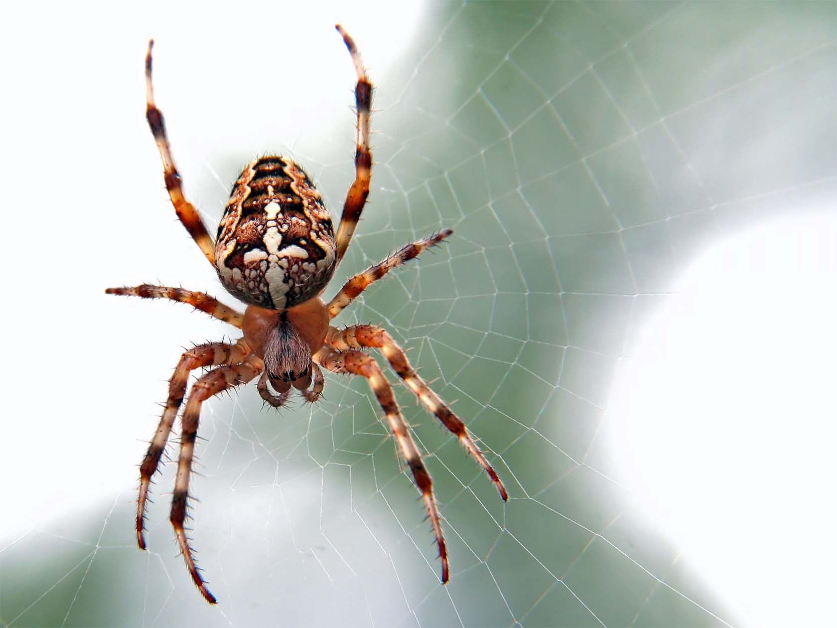 What Spiders May Be Lurking In Your Home