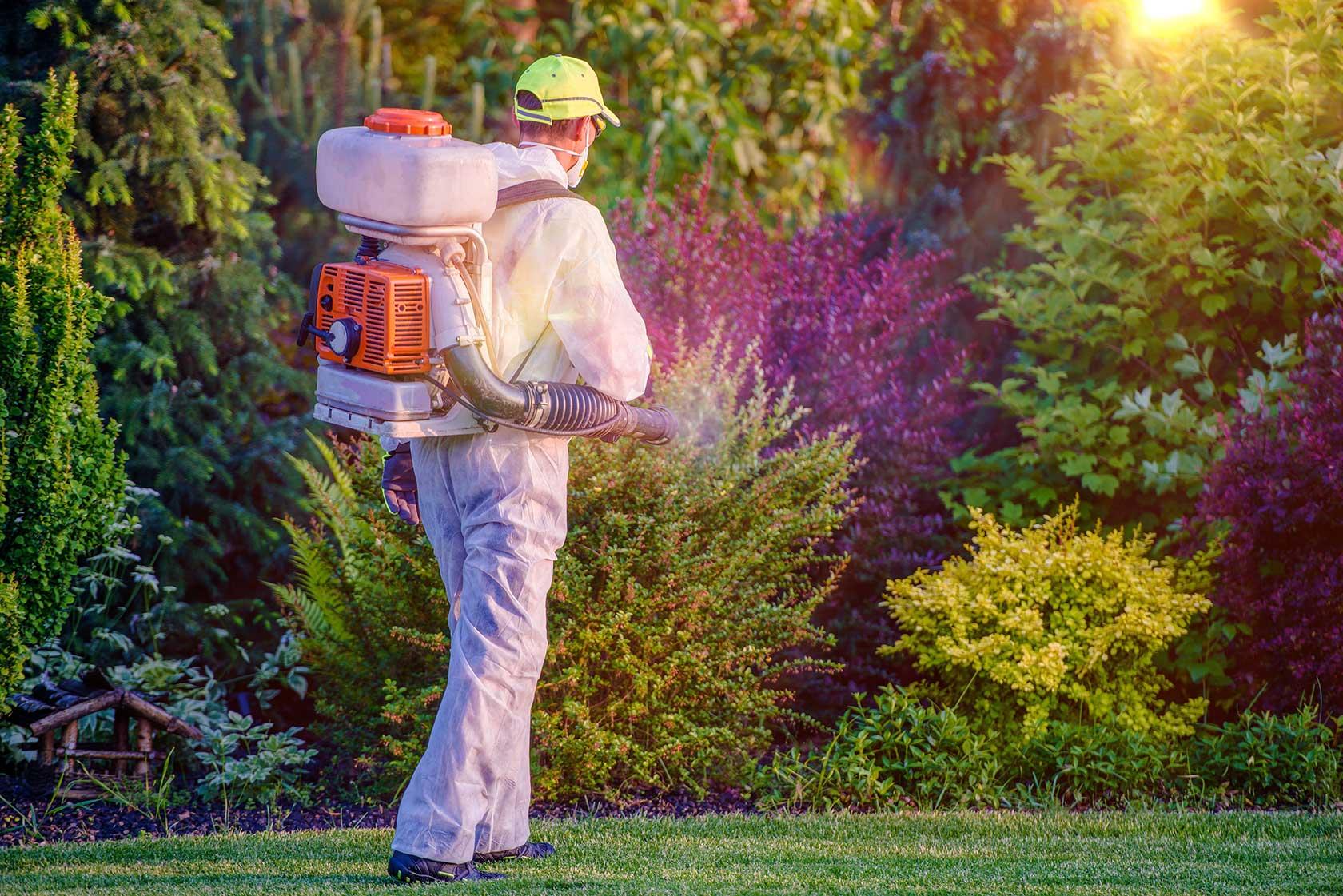 Pest Removal Service