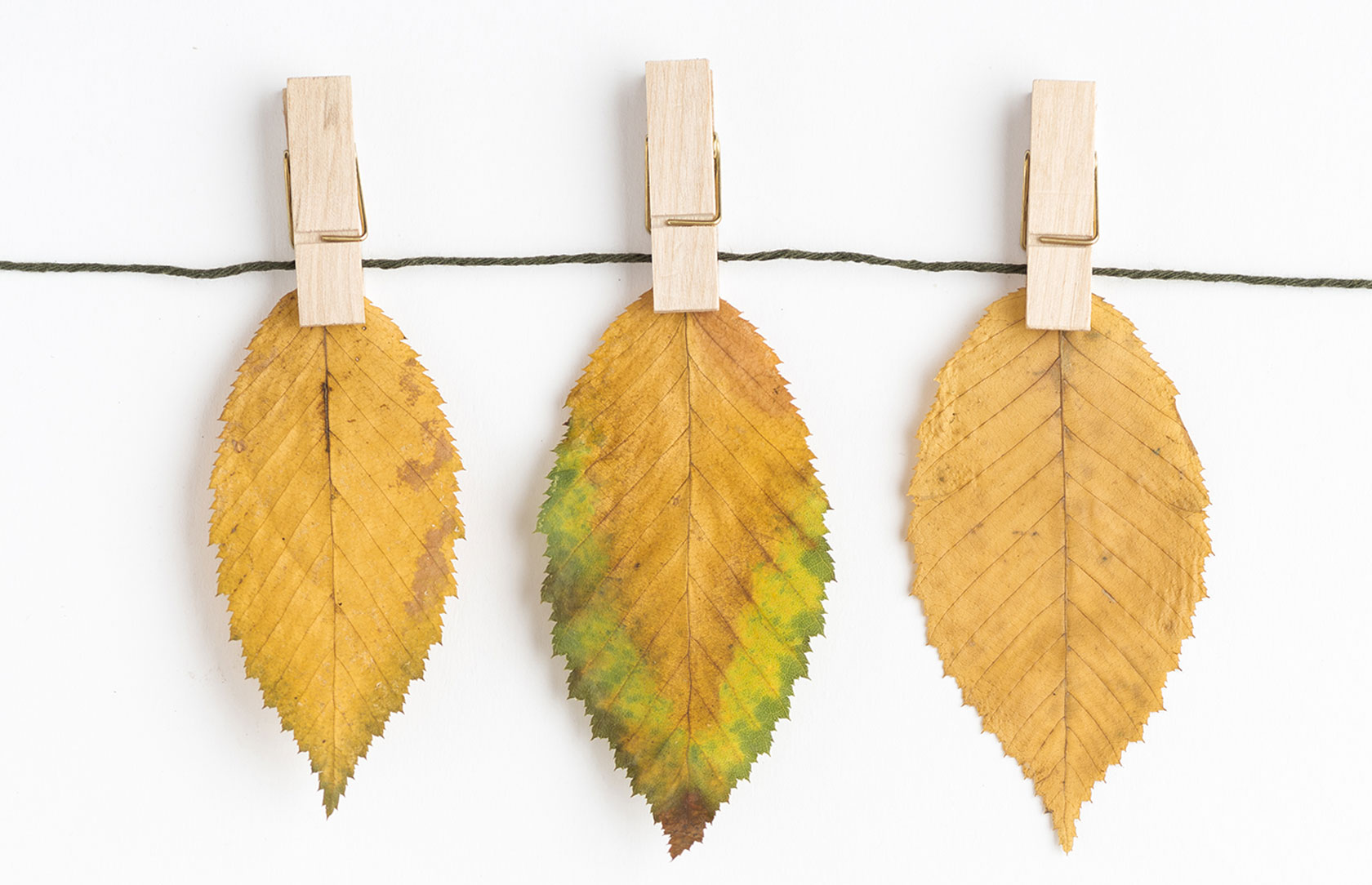 Creative Dried Leaves Decoration
